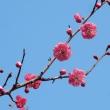 梅の花・・