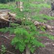 人類の持続可能な環境を創造する ~奇跡の木モリンガの植林活動~