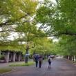 昭和記念公園に来ています