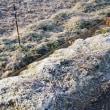 大霜の戻る今朝の笠間ですが