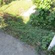 家庭菜園は雑草との戦い