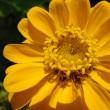 花の中に花……にみえるけど,そもそも花序だった。