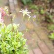 雨上がりの今朝の庭