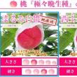 桃の季節の始まり