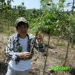 奇跡の木 モリンガを植えて活用~持続可能な地球づくり~