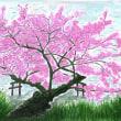 井の頭池「裏桜」