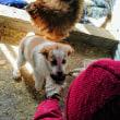 保護犬 テレサお母さんが初めて手から缶詰めフードを食べる!
