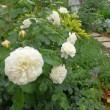 それからイギリス領事館の庭園