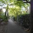 神代植物公園周辺