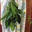 葉とうがらしの佃煮