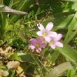 3_17_菜の花祭り