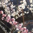 鎌倉散歩・・・ 松原庵~光則寺