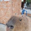 ☆阿蘇ファームランドの動物たちはみんなとっても良い顔をしてくれる02