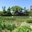 城北公園の菖蒲園