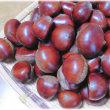 秋の味覚到来(^^♪果実が大きく風味が良い 富山滑川の自家製「栗」