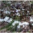 新潟便り 春が来た