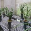 楽書き雑記「雑草も植物、名前もあります=高知の牧野植物園を見てきました」