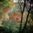 中山から大峰山そして紅葉の素晴らしい武田尾桜の園に下山しました