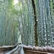 京都 嵐山雪の竹林