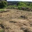 雨の後は草が伸びて大変