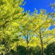 台風一過!輝く木々の葉