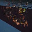 モネの庭の紅葉6