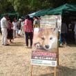 浜松城公園犬猫譲渡会(12/9-12/10)