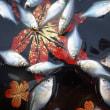 気が付けば秋分の日、そろそろタナゴ釣りに行かねば!!(北浦で久々にちょこっとタナゴ釣査!!)