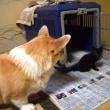 あ、猫化、と、今日のマリィと猫。