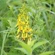 長野県諏訪郡下諏訪町にある八島湿原では、コオニユリなどがよく咲いています。