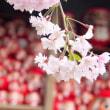 桜で繋がる日・・・「圧倒的桜。2018 」