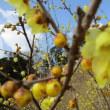 ジタンゴ山~宮地山~蝋梅まつり