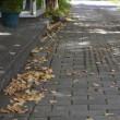 店舗前の落葉掃きが始まりました