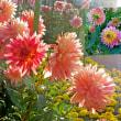 花彩々  本日は晴天・・薔薇日和