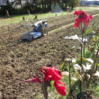 耕耘機で畑を耕し、小麦の種まき準備OK
