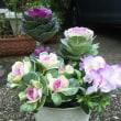 寄せ植え作りは最高に楽しいです💕そして、ご注文のシクラメン ビクトリアとポインセチア