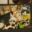 猫ちゃん写真集~(=^ェ^=)
