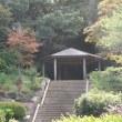 秋の色彩(鎌倉中央公園)