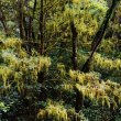 木の枝につくコケ植物3