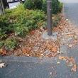 秋の訪れも たけなわ - 落ち葉です!