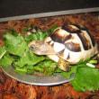 マルギナータリクガメとヘルマンリクガメの食べ方違い
