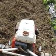 畝を耕し、茶色綿の種まきを済ませる