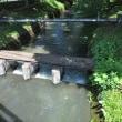 玉川上水に親しむ会・6月例会の下見3 柴崎分水を遡る