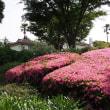 港の見える丘公園のバラ2018