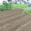 冬野菜の準備と草刈り
