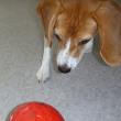 【おやつが転がり出るボールで遊びました】