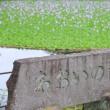 水城公園のホテイ葵
