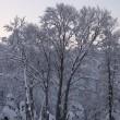 降り続いた雪、夜半には上がったようだ。