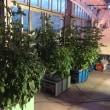 自作の水耕栽培装置?
