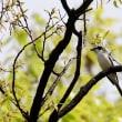都市公園の野鳥